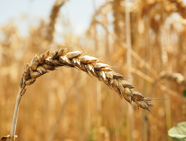 Real Change in Food Systems Needs Real Ethics<br><span class='date_feature'>July 1, 2015</span><br><div style='margin-top:69px; font-size:14px; color:#70cee4; font-family:geogria, sans-serif;'><a href='http://bioethicsbulletin.org/archive/real-change-in-food-systems-needs-real-ethics'style='font-size:14px; color:#70cee4; font-family:Geogria, serif;'>Read More</a><div>